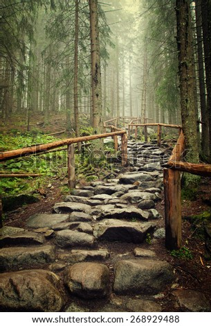 stone road in a coniferous forest in the mountains - stock photo
