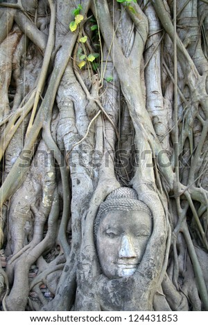 stone statue buddha head with tree roots around it
