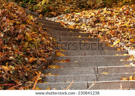 Stone steps in autumn park - stock photo