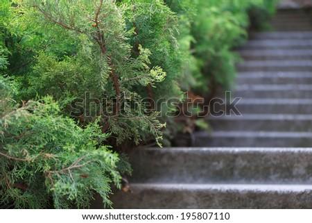 Stone steps in garden - stock photo