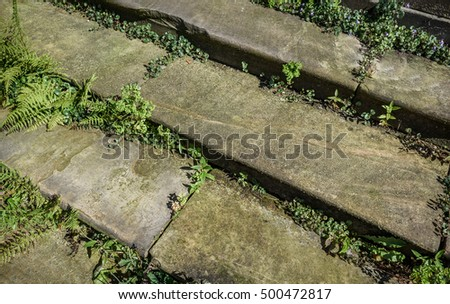 Stone Steps  overgrown with weeds.