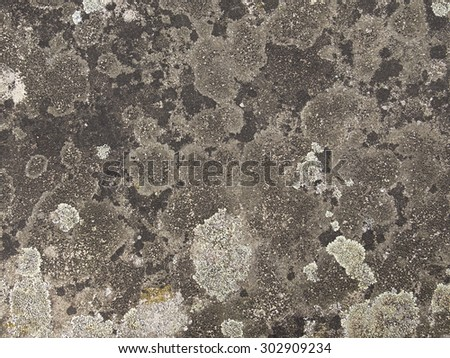 Stone surface overgrown with moss and lichen - stock photo