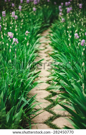 Stone walkway in the park with lush blooming irises - stock photo