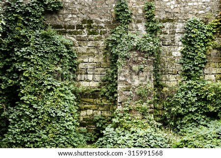 Stone wall overgrown with ivy in retro style - stock photo