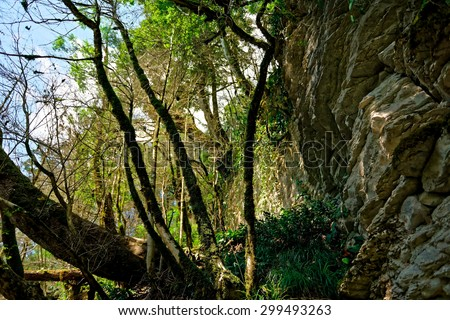 Stone walls and paths of yew-and-boxwood tree grove, Sochi, Russia.