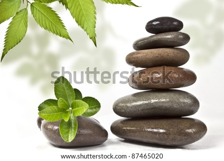 Stones and green plant with drops - stock photo