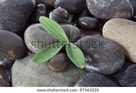 Stones and green plant with drops