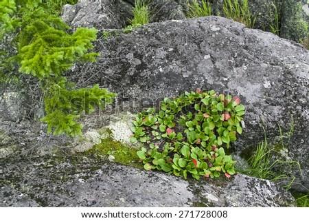 Stones and green plants - stock photo