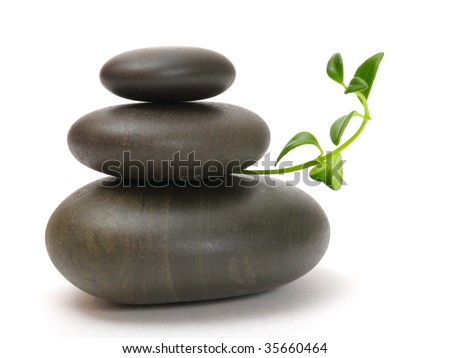 stones and sprout - stock photo