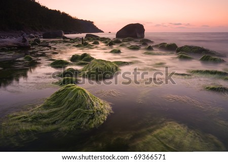 stones covered with algae in the Baltic Sea coast at sunset - stock photo