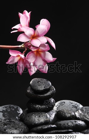 Stones tower with branch frangipani on wet pebble