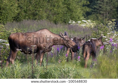 Stop and smell the flowers - stock photo