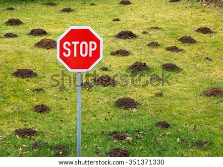 Stop damage of grass lawn by mole - stock photo