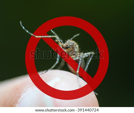 Stop prohibit no sign on mosquito on human skin w/ human blood in insect stomach: Tropical animal danger bacteria carrier cause dangerous illness/ disease- zika virus, malaria, flavivirus, dengue gnat - stock photo