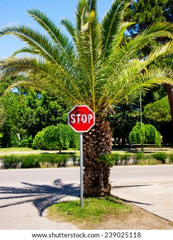 stop sign and palm tree