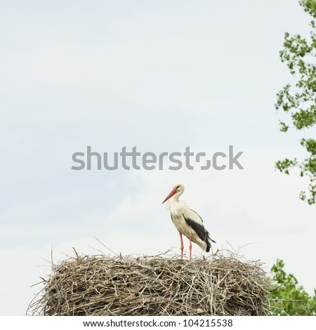 Stork in its nest - stock photo