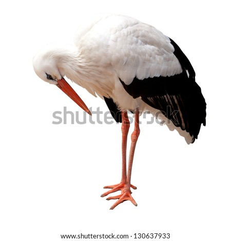 Stork isolated on white background