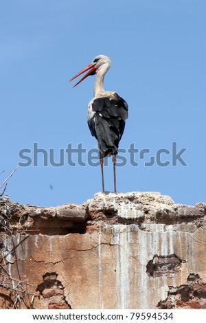 Stork, Marrakech - stock photo