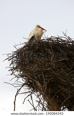 Stork sitting in the nest in Morocco