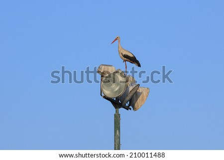 Stork standing on the lanterns at morning - stock photo