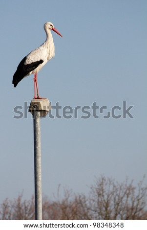 Stork that has stayed in Europe despite the cold winter, standing on a streetlamp with lots of space for your text - stock photo
