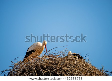 storks in a nest on a roof