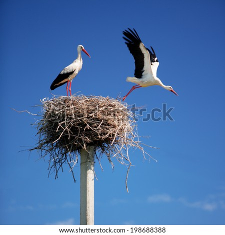 Storks on a background of blue sky - stock photo