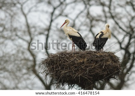 storks on green grass in sunny day, nature series - stock photo