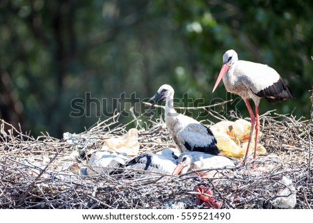 Stork Stock Photos Royalty Free Images Amp Vectors