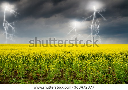 Storm clouds above a rape seed field