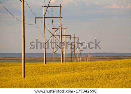 Storm clouds over a Saskatchewan canola crop - stock photo