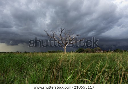 Storm clouds over the trees, dried in the open air.