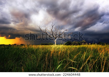 Storm clouds over the trees, dried in the open air. Stunning sky - stock photo