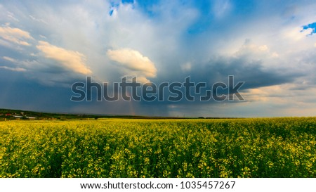 Storm cloudy sky over rape field in steppe