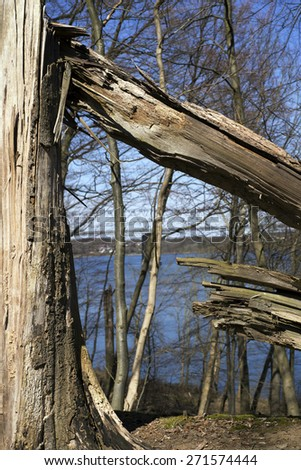 Storm damage. Fallen tree in a Danish forest after a storm. Little Belt in the background. - stock photo