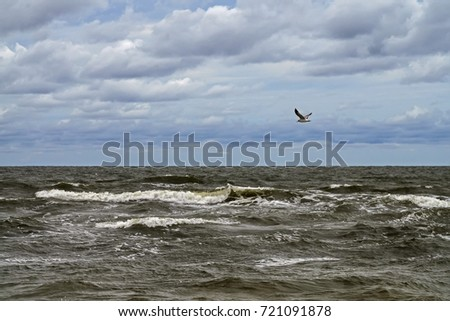 Stormy Baltic sea with clouds and flying seagull, Palanga, Lithuania