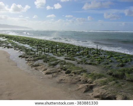 Stormy beach with algae in Oahu, Hawaii