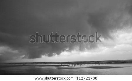 stormy beach with birds - stock photo