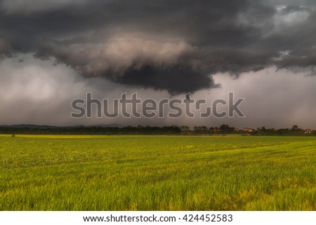 Stormy clouds over green cereal fields