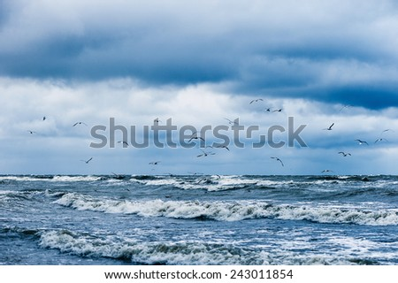 Stormy sea with seagulls in blue sky  - stock photo