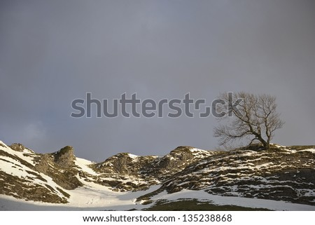 stormy sky above lonely tree on snow covered mountain ridge landscape - stock photo