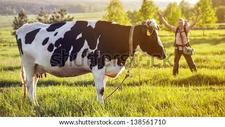 Stout cow near tourist - stock photo