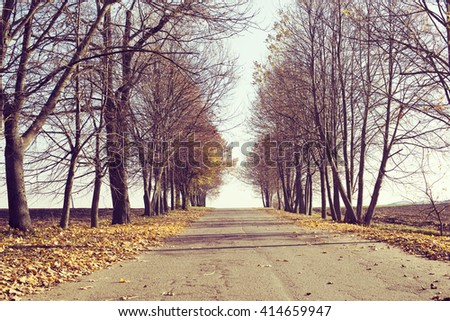 straight alley of almost bare trees by bright autumn day