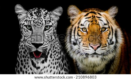 Straight face of Leopard and Tigerr. (And you could find more animals in my portfolio.)