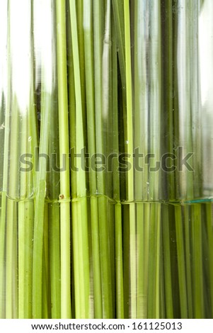 Straight green leaf in water texture