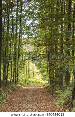 Straight road in forest covered with brown leaves and trees, peaceful sunny afternoon. (Seelctive focus) - stock photo