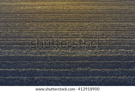 Straight rows of plowed soil for potatoes crops in springtime. - stock photo