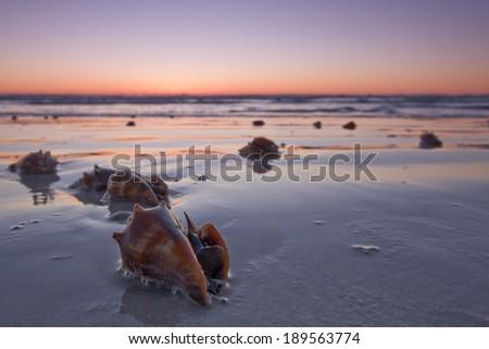 Stranded Shells at Sunset - stock photo