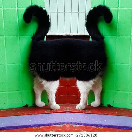 Strange cat portrait - stock photo