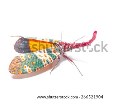 Strange colorful insects isolate on white - stock photo